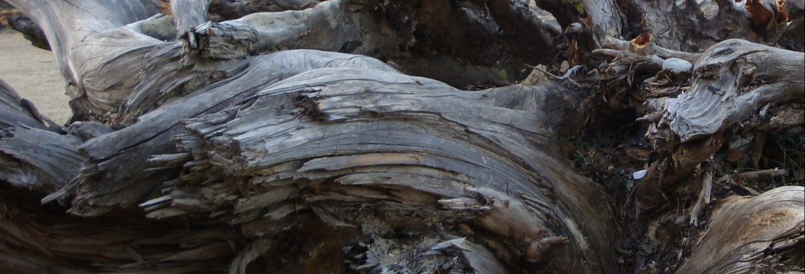 #torn, #broken, #love poem, #love, #tree, #bark, #life